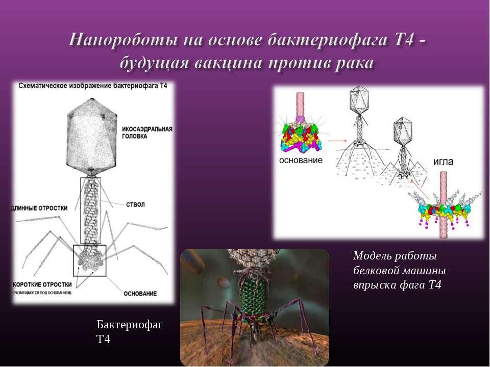 Бактериофаг Т4 Модель работы белковой машины впрыска фага Т4