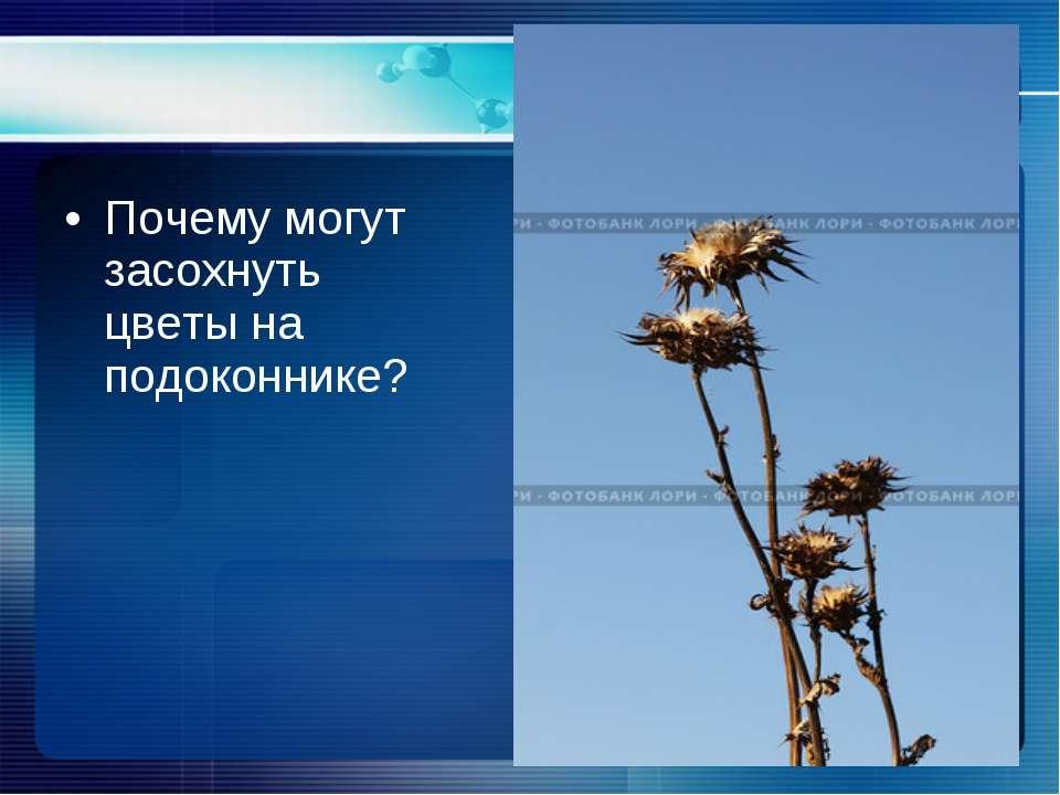 Почему могут засохнуть цветы на подоконнике?