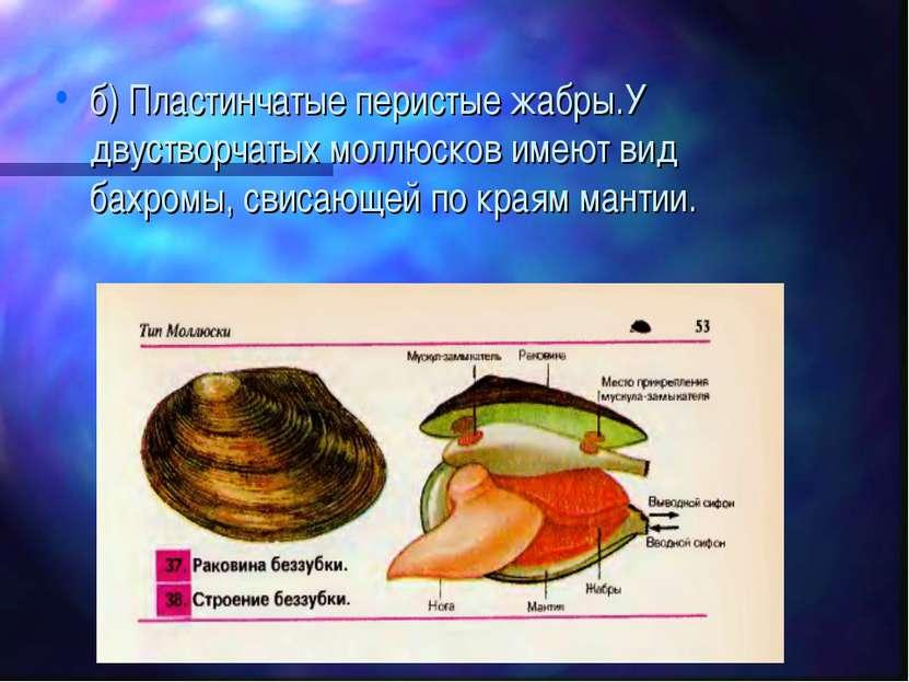 б) Пластинчатые перистые жабры.У двустворчатых моллюсков имеют вид бахромы, с...