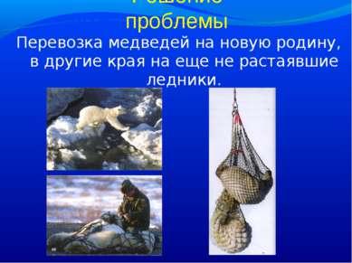 Решение проблемы Перевозка медведей на новую родину, в другие края на еще не ...