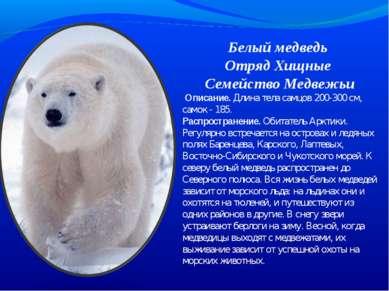 Белый медведь Отряд Хищные Семейство Медвежьи Описание. Длина тела самцов 20...