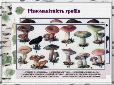 Різноманітність грибів