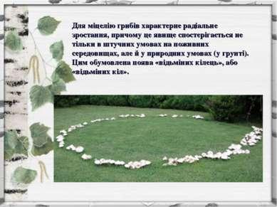 Для міцелію грибів характерне радіальне зростання, причому це явище спостеріг...