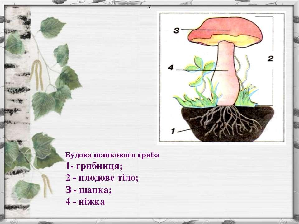 Б Будова шапкового гриба 1- грибниця; 2 - плодове тіло; З - шапка; 4 - ніжка