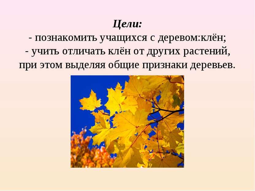Цели: - познакомить учащихся с деревом:клён; - учить отличать клён от других ...