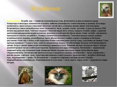 Ястребиные Характеристика. Ястреби ные — семейство соколообразных птиц. Встре...