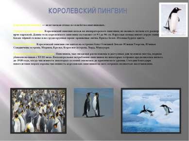 КОРОЛЕВСКИЙ ПИНГВИН Королевский пингвин — нелетающая птица из семейства пингв...