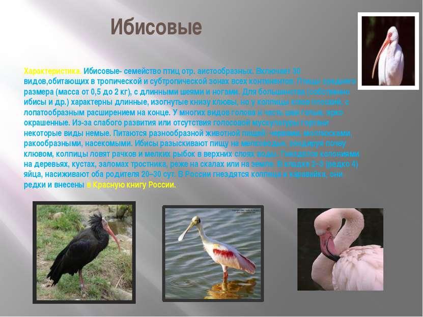 Ибисовые Характеристика. Ибисовые- семейство птиц отр. аистообразных. Включае...