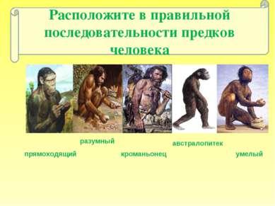 Расположите в правильной последовательности предков человека австралопитек ра...