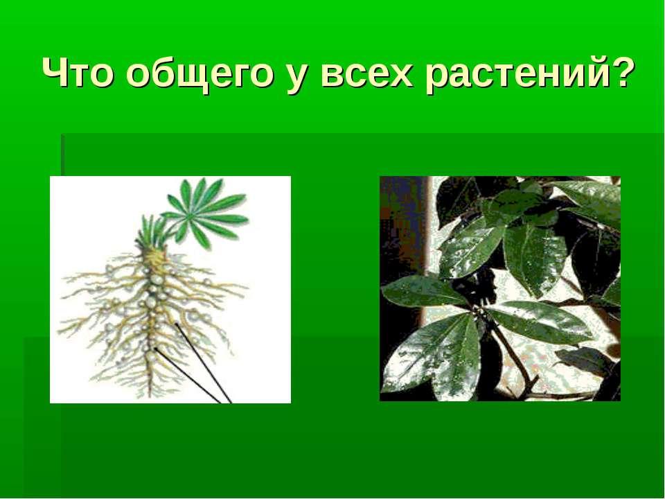 Что общего у всех растений?