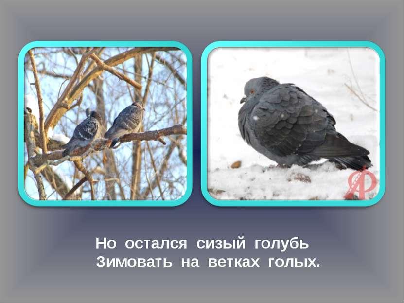 Но остался сизый голубь Зимовать на ветках голых.