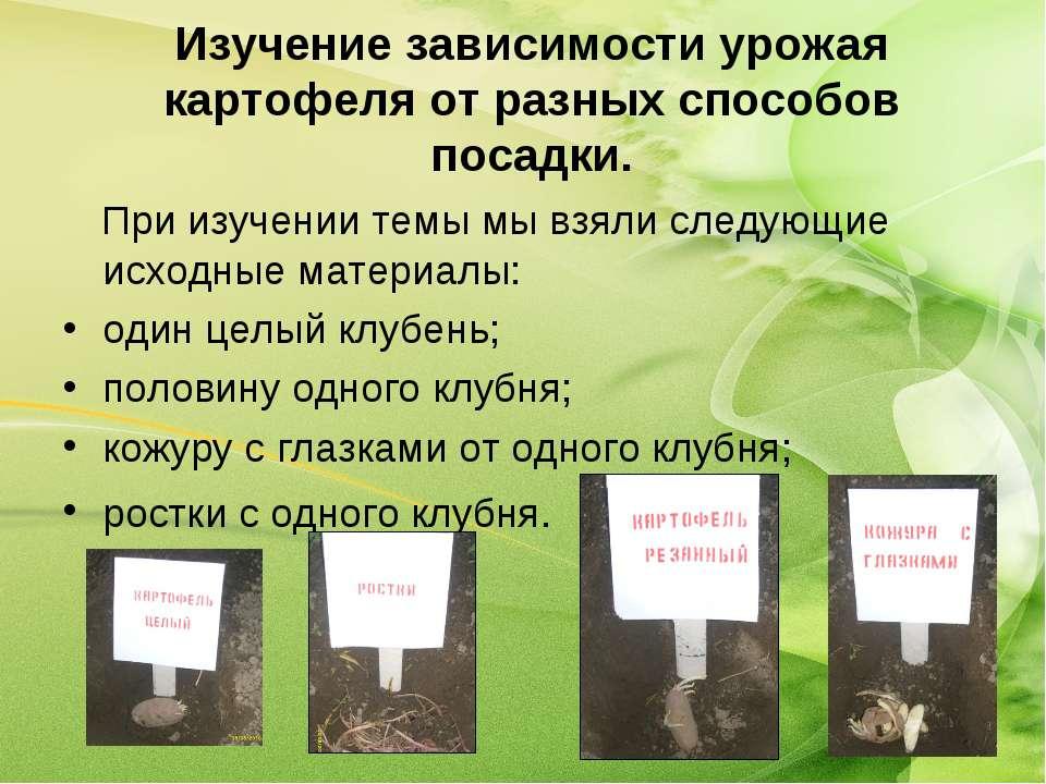 Изучение зависимости урожая картофеля от разных способов посадки. При изучени...