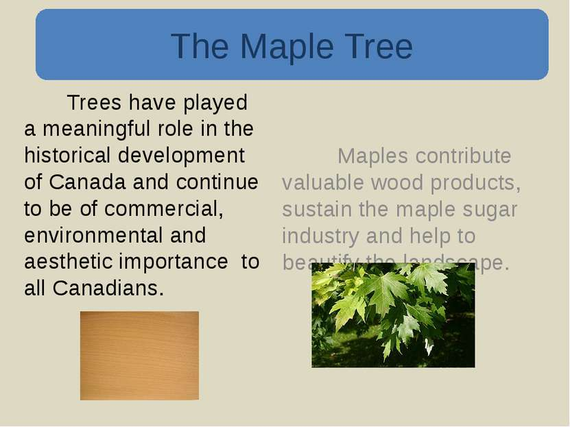 Trees have played a meaningful role in the historical development of Canada a...