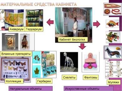 Муляжи Аквариум Влажные препараты Террариум Кабинет биологии Фантомы Скелеты ...