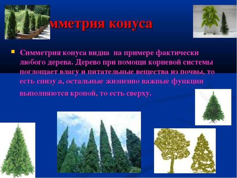 Симметрия конуса Симметрия конуса видна на примере фактически любого дерева. ...
