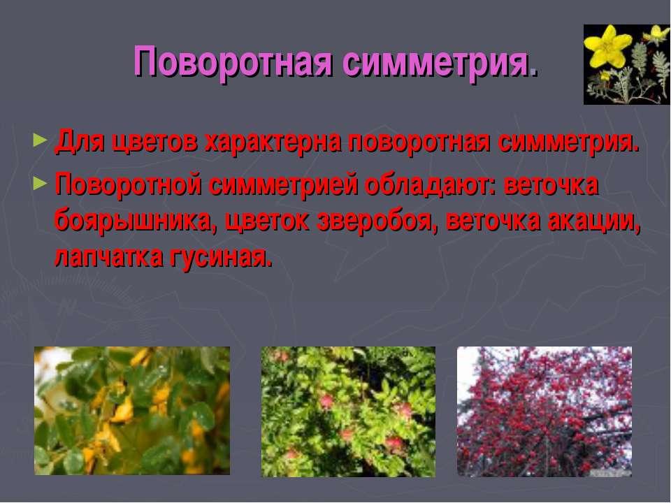 Поворотная симметрия. Для цветов характерна поворотная симметрия. Поворотной ...