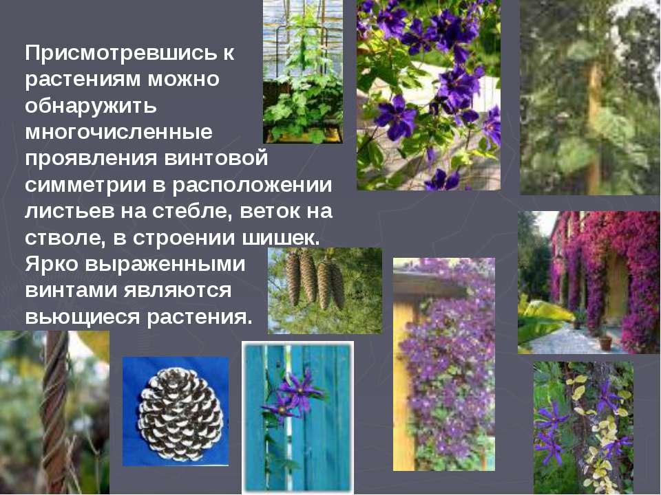 Присмотревшись к растениям можно обнаружить многочисленные проявления винтово...