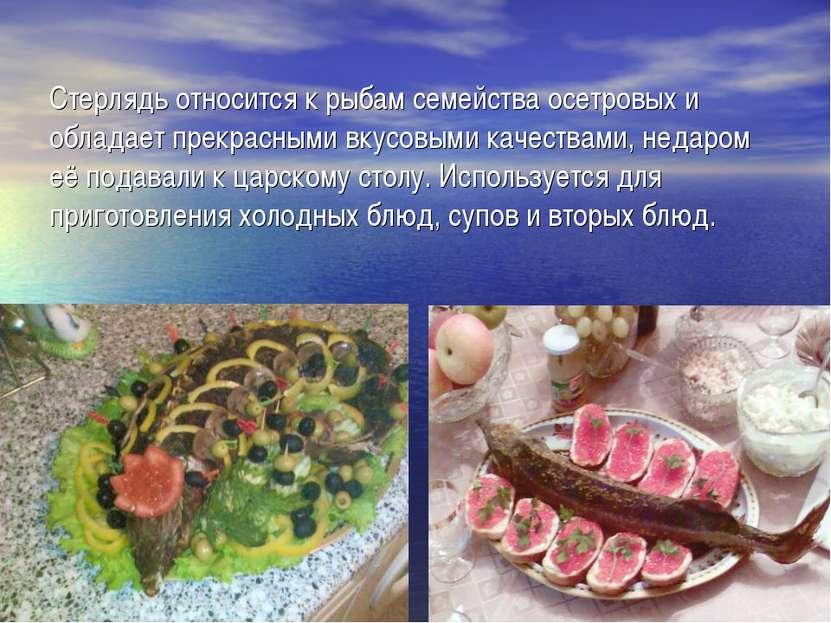 Стерлядь относится к рыбам семейства осетровых и обладает прекрасными вкусовы...