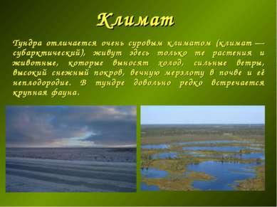 Климат Тундра отличается очень суровым климатом (климат— субарктический), жи...