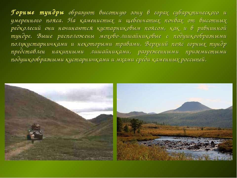 Горные тундры образуют высотную зону в горах субарктического и умеренного поя...