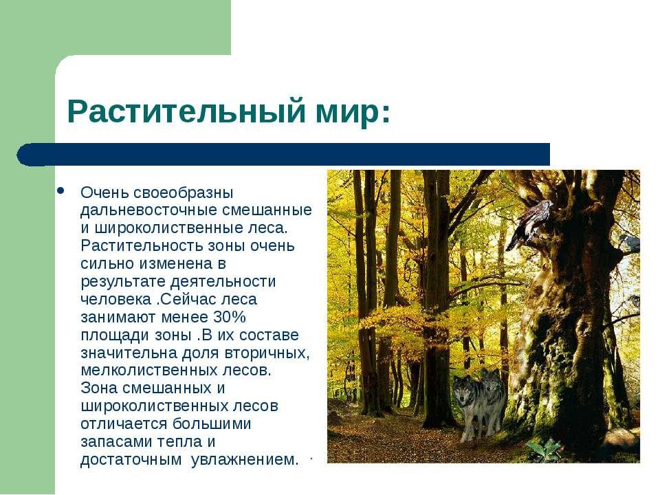 Растительный мир: Очень своеобразны дальневосточные смешанные и широколиствен...