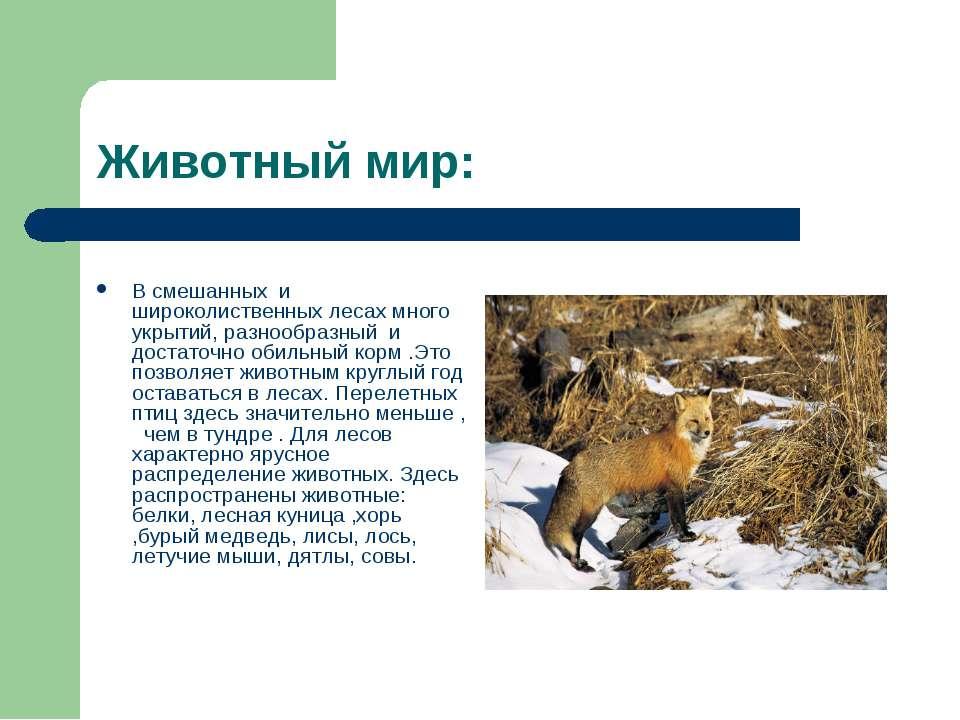 Животный мир: В смешанных и широколиственных лесах много укрытий, разнообразн...