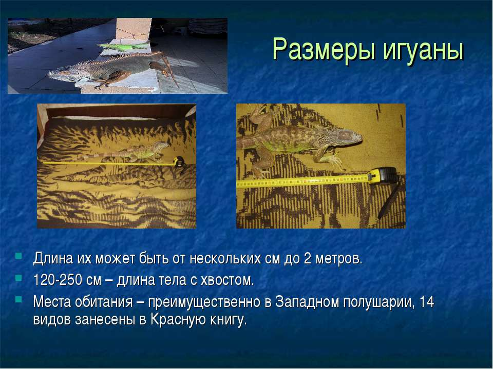 Размеры игуаны Длина их может быть от нескольких см до 2 метров. 120-250 см –...