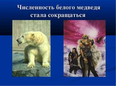 Численность белого медведя стала сокращаться