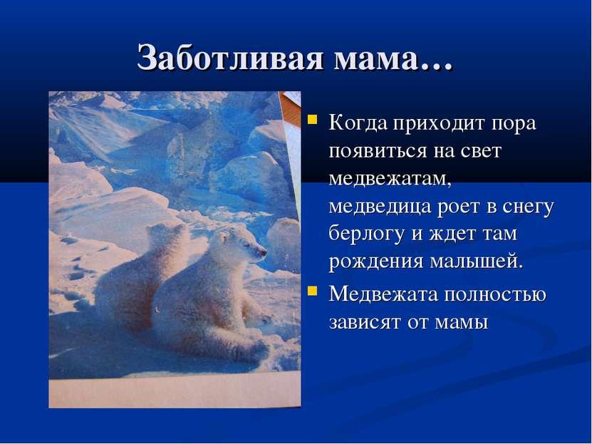 Заботливая мама… Когда приходит пора появиться на свет медвежатам, медведица ...