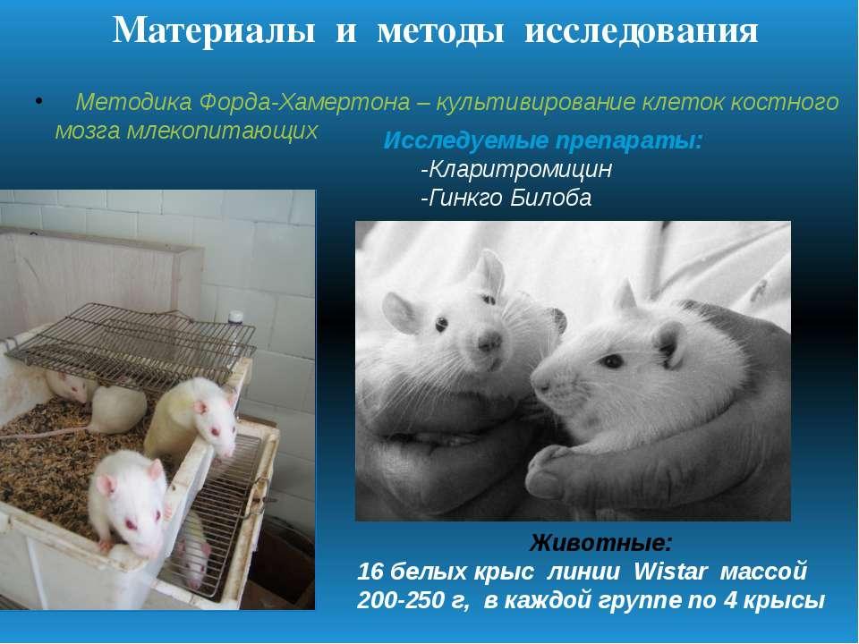 Методика Форда-Хамертона – культивирование клеток костного мозга млекопитающи...