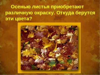 Осенью листья приобретают различную окраску. Откуда берутся эти цвета?