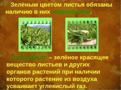 Зелёным цветом листья обязаны наличию в них хлорофилла. Хлорофилл – зелёное к...