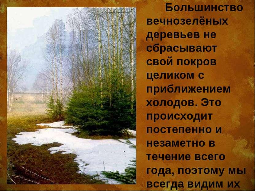 Большинство вечнозелёных деревьев не сбрасывают свой покров целиком с приближ...