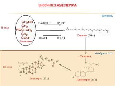 II этап НАДФНН+ НАДФ+ 18 АТФ III этап Холестерол (27 с) Цитозоль Сквален Мемб...