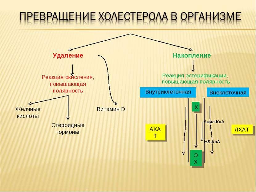 Витамин D Стероидные гормоны Желчные кислоты Реакция окисления, повышающая по...