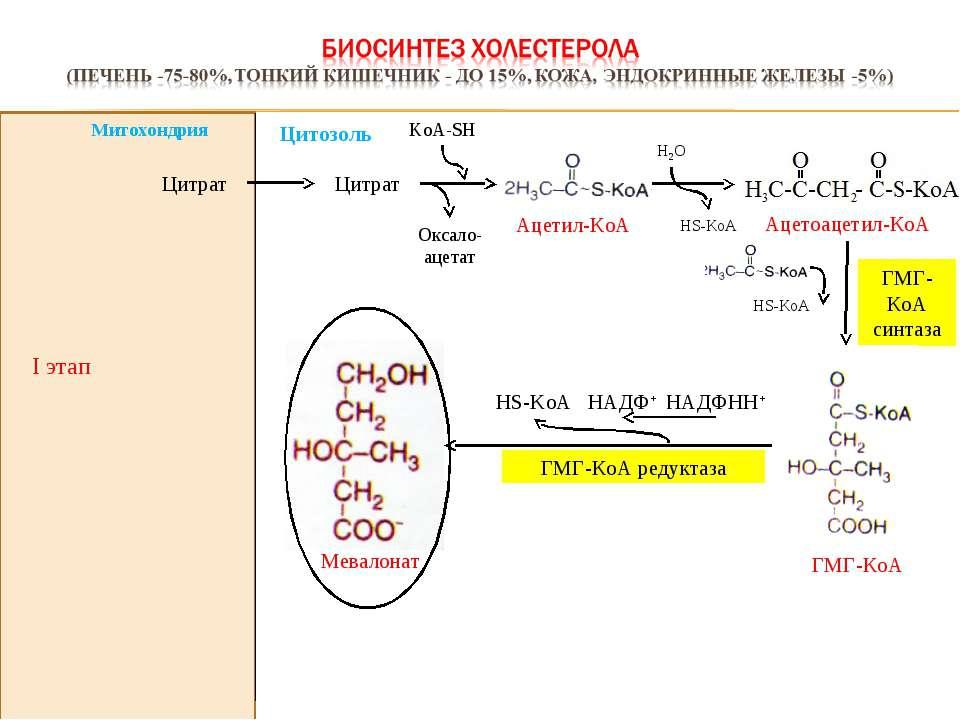 I этап Оксало-ацетат KoА-SH Цитрат Цитрат ГМГ-КоА синтаза НАДФНН+ HS-KoA НАДФ...