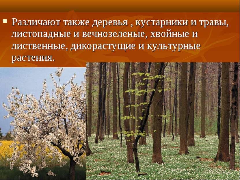 Различают также деревья , кустарники и травы, листопадные и вечнозеленые, хво...