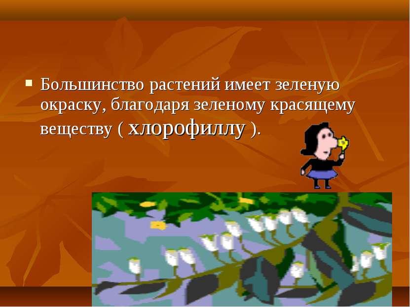 Большинство растений имеет зеленую окраску, благодаря зеленому красящему веще...