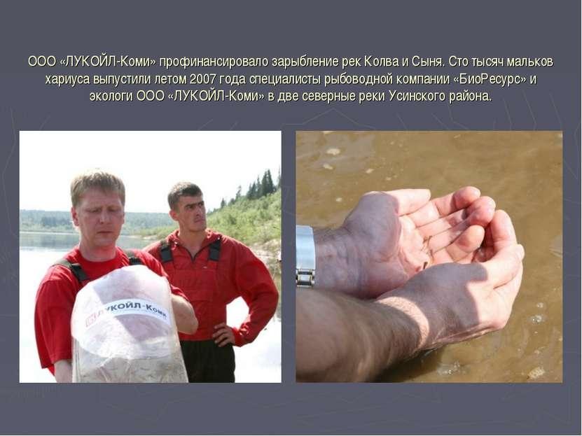 ООО «ЛУКОЙЛ-Коми» профинансировало зарыбление рек Колва и Сыня. Сто тысяч мал...