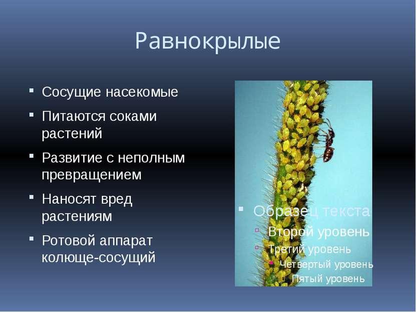 Равнокрылые Сосущие насекомые Питаются соками растений Развитие с неполным пр...