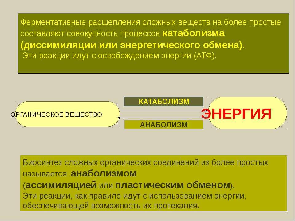 ОРГАНИЧЕСКОЕ ВЕЩЕСТВО ЭНЕРГИЯ КАТАБОЛИЗМ АНАБОЛИЗМ Ферментативные расщепления...