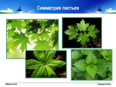 Чабаненко Катя Геометрия 8 класс Симметрия листьев Геометрия 8 класс
