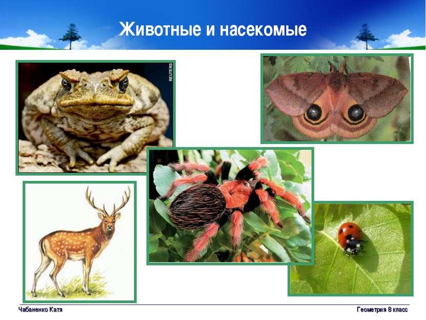 Чабаненко Катя Геометрия 8 класс Животные и насекомые Геометрия 8 класс