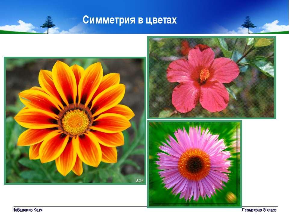 Чабаненко Катя Геометрия 8 класс Симметрия в цветах Геометрия 8 класс