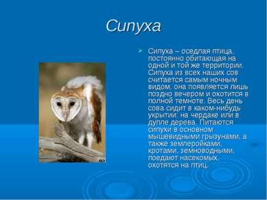 Сипуха Сипуха – оседлая птица, постоянно обитающая на одной и той же территор...