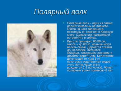 Полярный волк Полярный волк – один из самых редких животных на планете. Охота...