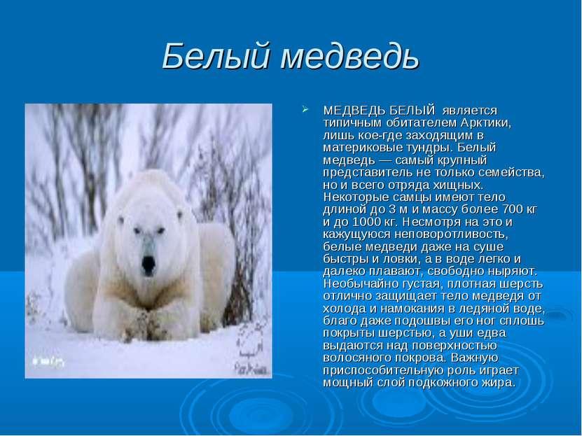 Белый медведь МЕДВЕДЬ БЕЛЫЙ является типичным обитателем Арктики, лишь кое-гд...