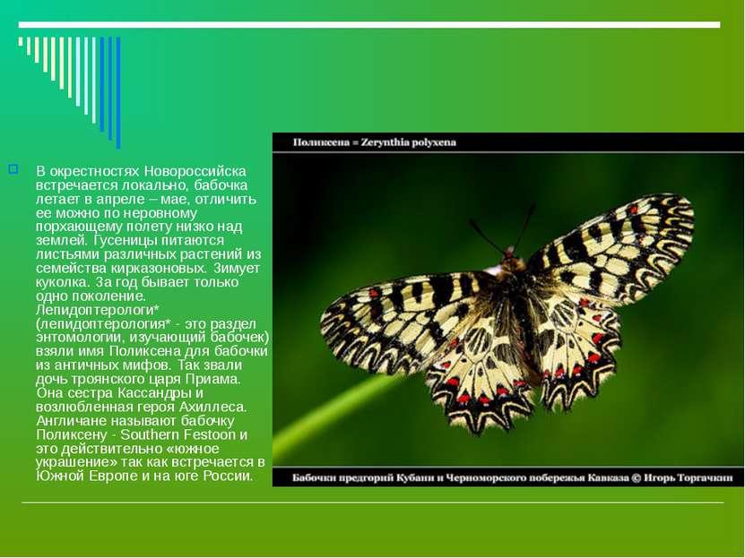 В окрестностях Новороссийска встречается локально, бабочка летает в апреле – ...