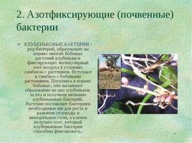 * 2. Азотфиксирующие (почвенные) бактерии КЛУБЕНЬКОВЫЕ БАКТЕРИИ - род бактери...