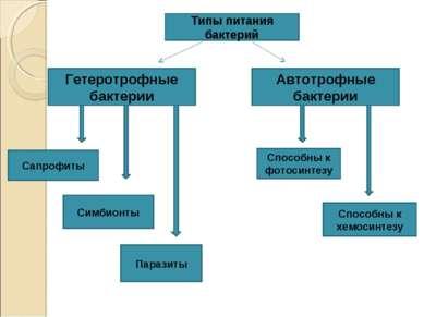 Типы питания бактерий Гетеротрофные бактерии Автотрофные бактерии Сапрофиты С...